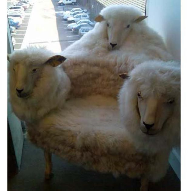 sheepchair