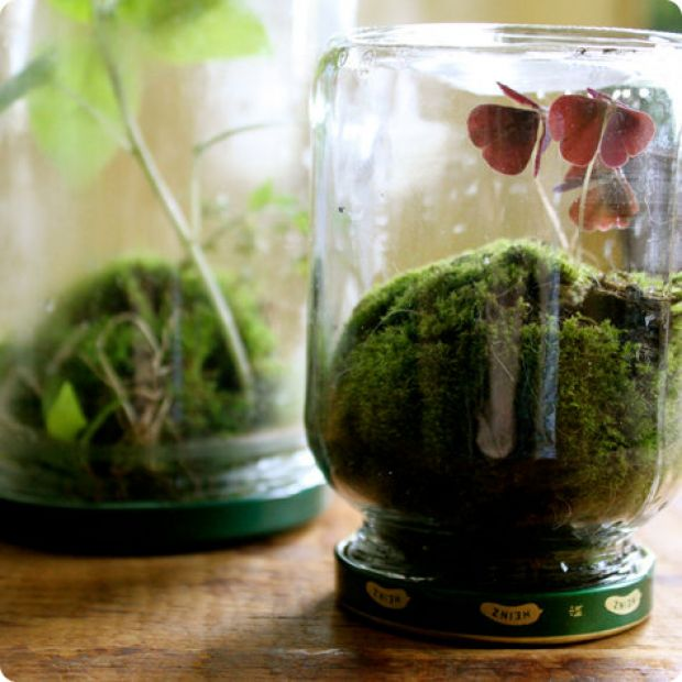 terrarium