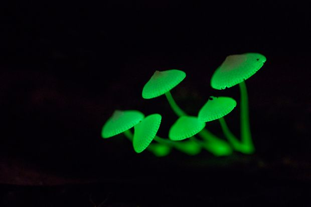 glow_in_the_dark_shrooms